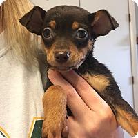 Adopt A Pet :: Moe (FORT COLLINS) - Fort Collins, CO
