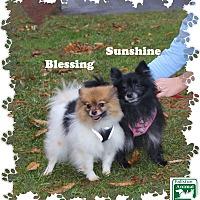Adopt A Pet :: Blessing & Sunshine - Fallston, MD