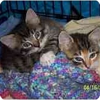 Adopt A Pet :: Austin & Annie - Arlington, VA