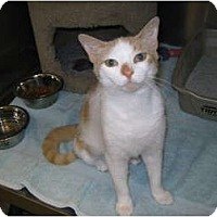 Adopt A Pet :: Tara - Warminster, PA