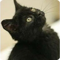 Adopt A Pet :: JujuBee - Chicago, IL