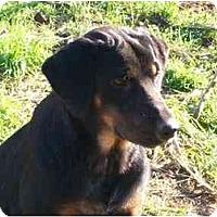 Adopt A Pet :: Twiggy - Albany, NY