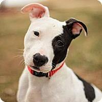Adopt A Pet :: Phantom - Reisterstown, MD