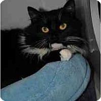 Adopt A Pet :: Miss Oreo - Marietta, GA