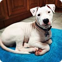 Adopt A Pet :: Dudley - San Jose, CA