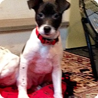 Adopt A Pet :: Nikki - Randolph, NJ