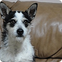 Adopt A Pet :: Mr. P - Meridian, ID