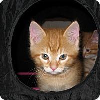 Adopt A Pet :: Taco - Fort Wayne, IN