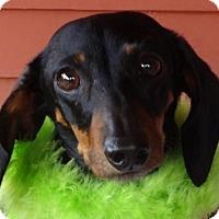 Adopt A Pet :: HERA - Portland, OR