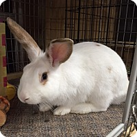 Adopt A Pet :: Spunky - Williston, FL