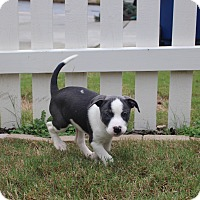 Adopt A Pet :: Two Step - Atlanta, GA