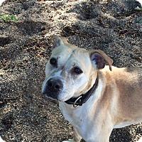 Adopt A Pet :: Kiah - Red Wing, MN