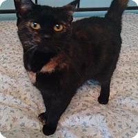 Adopt A Pet :: Tortilla - Morganton, NC