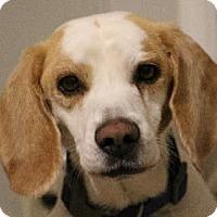 Adopt A Pet :: George - Avon, NY