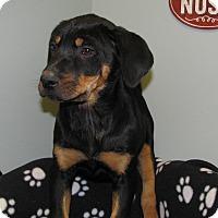 Adopt A Pet :: Baller - Groton, MA