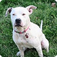 Adopt A Pet :: Tabitha - Glastonbury, CT