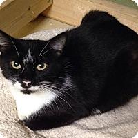 Adopt A Pet :: Choux - Memphis, TN