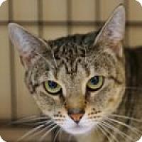 Adopt A Pet :: Kristelle - Medford, MA