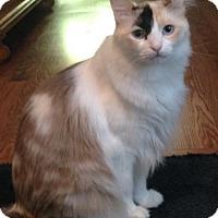 Adopt A Pet :: Speckles - Benton, LA