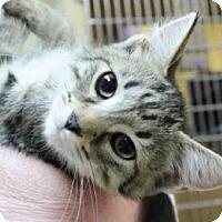 Adopt A Pet :: ERIC - Pittsburgh, PA
