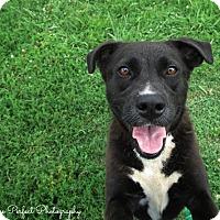 Adopt A Pet :: Jammy - Harmony, Glocester, RI