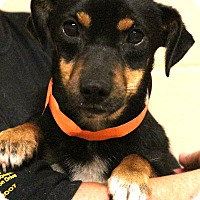 Adopt A Pet :: Kewbie~meet me~special needs! - Glastonbury, CT