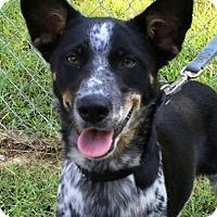 Adopt A Pet :: Dorie - Washington, DC