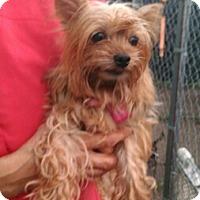 Adopt A Pet :: Dolly - Mukwonago, WI