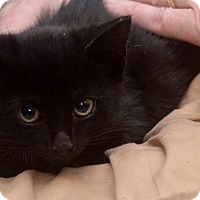Adopt A Pet :: Hyundai - Brooklyn, NY