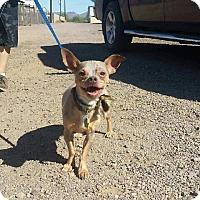 Adopt A Pet :: Naked - Mesa, AZ