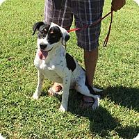 Adopt A Pet :: Rubicon - Harmony, Glocester, RI