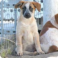 Adopt A Pet :: Streusel - Loxahatchee, FL
