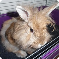 Adopt A Pet :: Honey - Newport, KY