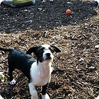 Adopt A Pet :: Farrah - Weeki Wachee, FL
