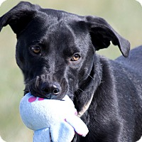 Adopt A Pet :: Vader - Broken Arrow, OK
