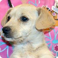 Adopt A Pet :: Dilly - Wildomar, CA