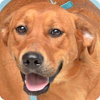 Adopt A Pet :: Ruby - DuQuoin, IL
