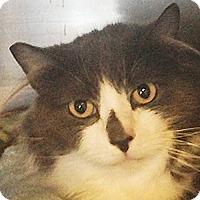 Adopt A Pet :: Slivee - Port Angeles, WA