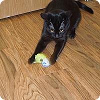 Adopt A Pet :: Tina Turner - Medina, OH