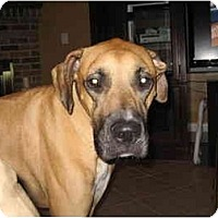 Adopt A Pet :: Rocco - Jacksonville, FL