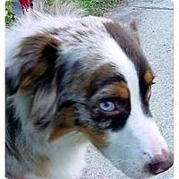 Adopt A Pet :: Bleu - Orlando, FL