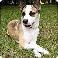 Adopt A Pet :: Bela - Mocksville, NC