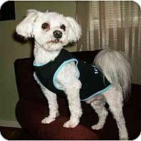 Adopt A Pet :: Jackson - Mooy, AL