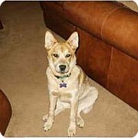 Adopt A Pet :: Domino In California - Phoenix, AZ