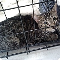 Adopt A Pet :: Wild Thang - Willington, CT