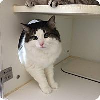 Adopt A Pet :: *MUFFIN - Winder, GA