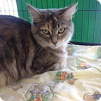 Adopt A Pet :: Amelia - Caistor Centre, ON