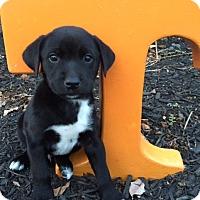 Adopt A Pet :: Dobbs - Hamburg, PA