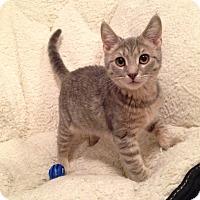 Adopt A Pet :: Nala - Colmar, PA