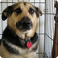 Adopt A Pet :: Olga - New Orleans, LA